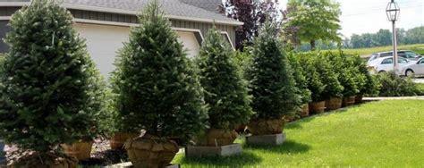 storeyland christmas tree farm ohio christmas trees cut