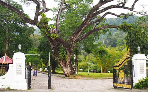 Botanic Gardens Penang Attractions Wonderful Malaysia Penang Botanical Garden