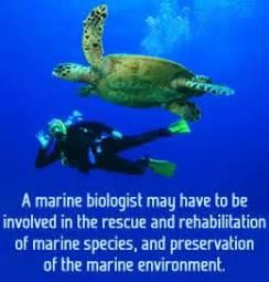 best 25 marine biology ideas only on marine biology marine biology careers