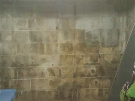 white mold on concrete wall mold or efflorescence how to tell the difference