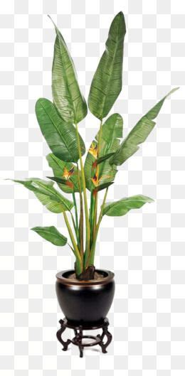 green large leaves potted buckle png large leaves potted
