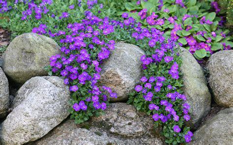 top plants for an alpine rock garden rock garden