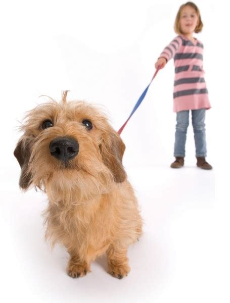 how to your to walk without a leash how to your to walk on a leash properly puppy biting a lot obedience