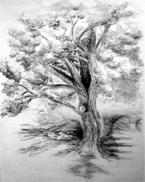 maple tree drawing maple tree charcoal drawing
