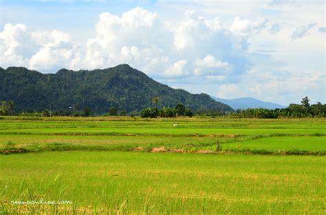 wallpaper misteri alam pemandangan sawah padi di kung pemandanganoce
