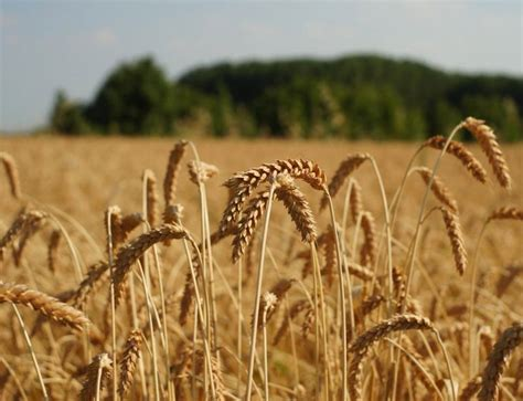 gastrosofia valori dell agricoltura integrata