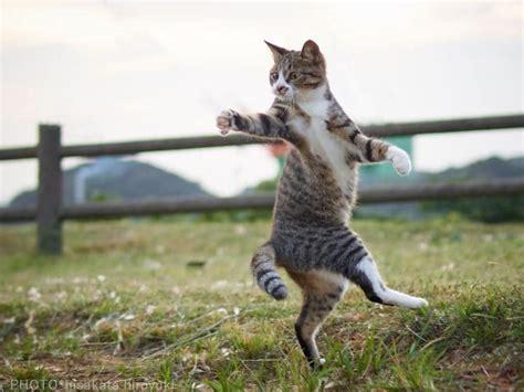 Mainan Kucing Pancingan karya potret unik yang memperlihatkan kucing bergaya bagaikan otakurei digital pop