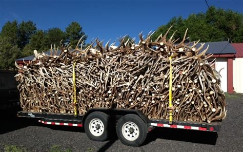Deer Sheds For Sale by 5 Unique Ways To Show Your Sheds Fin And Field