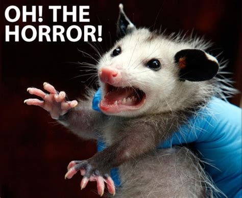 Possum Memes - oppossum on tumblr