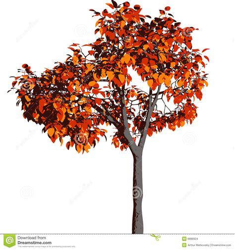 autumn season fall tree stock illustration i2767767 at featurepics autumn tree vector stock images image 6886924