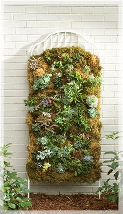 Vertical Moss Garden Vertical Succulent Garden Pictures Photos And Images For