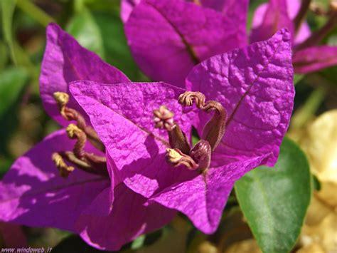 fiori spa pin viola fiori spa perline foto hd sfondi per il desktop