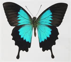 of a butterfly butterfly sightings the artstor