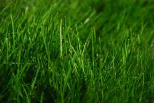 grass can lead to more youthful skin