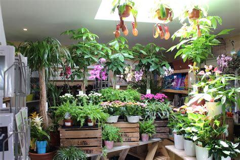 plants flowers ferns house plants perennials
