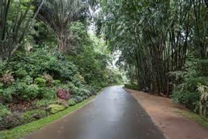 bambus garten stuttgart bambus garten kreative ideen f 252 r ihr zuhause design