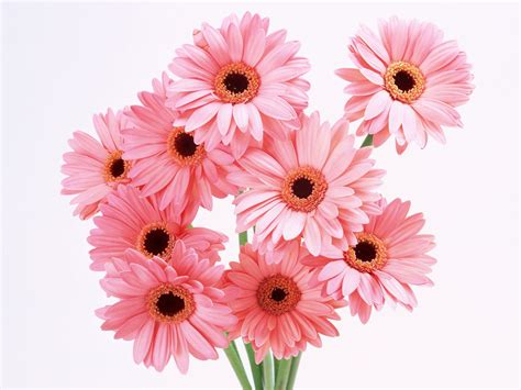 pink flower wallpaper flowers planets pink flowers wallpaper