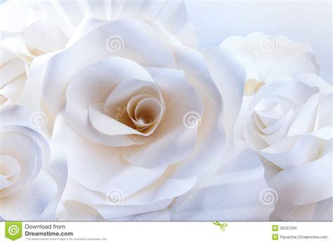 asombrosas imagenes de rosas amarillas imagenes de belle rose bianche su fondo bianco fotografia stock