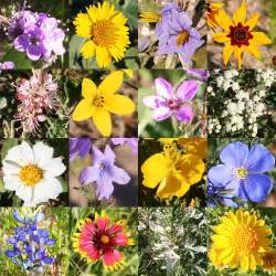 Florists In Tx Wildflowers Search Ideas