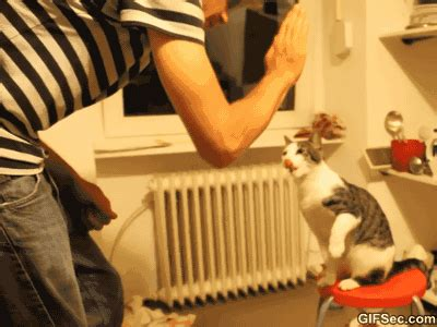 gif bro cat doing high five viral viral videos