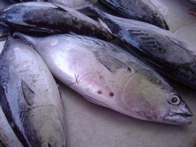 Minyak Ikan Biasa proses pengolahan minyak ikan bengkel teknologi industri pertanian