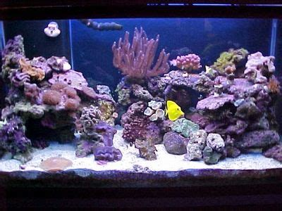 17 best images about saltwater fish tank on