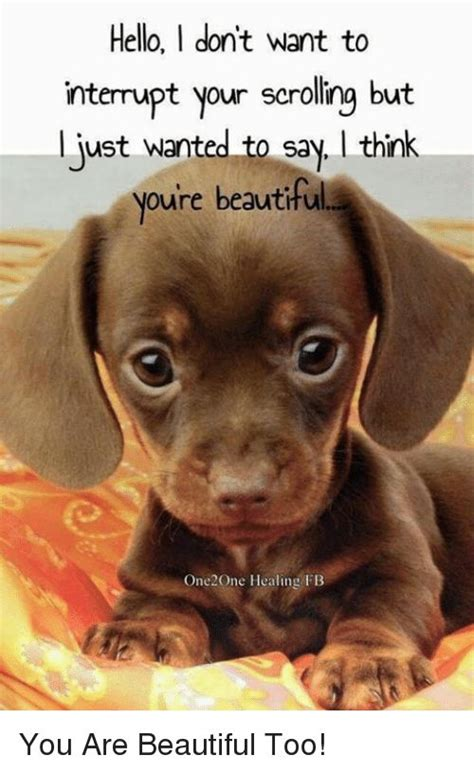 cute dog quotes ideas  pinterest sweet dog quotes puppy quotes  pet quotes