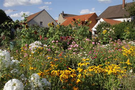 naturgarten ideen der umwelt inspiriert naturgarten anlegen bauen de