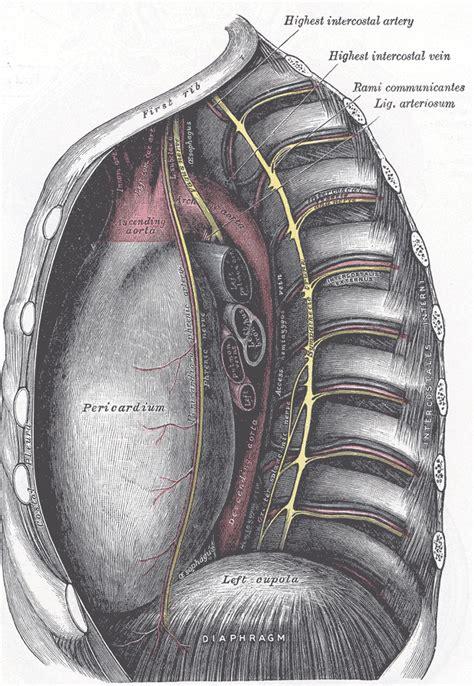 ligamentum arteriosum wikipedia