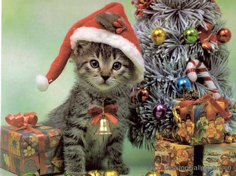 lovely cat hd wallpapers free pictures download hd cute and lovely christmas cat hd wallpaper photos 12