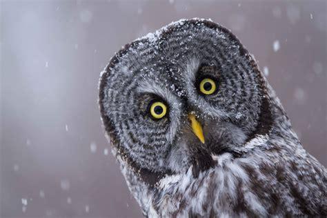 owl edmonton wildlife