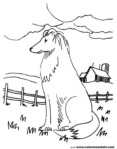 border collies dogs to coloring pages