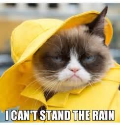 Funny Rain Memes - i can t stand the rain grumpy cat cats pinterest