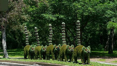 montreal botanical garden topiary horticultural artists grow fantastical at the