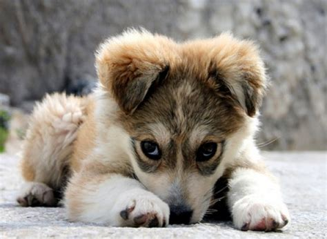 sorry puppy puppy pictures national puppy day puppy things to consider when