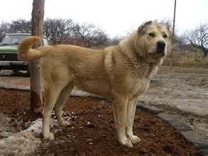 Dog Gampr Photo Gallery