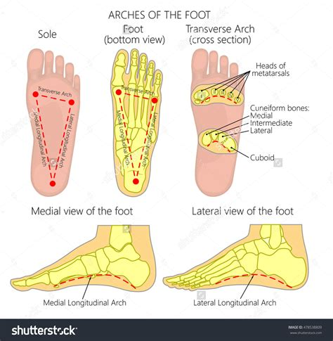 foot diagrams foot on the side of my foot diagram anatomy list