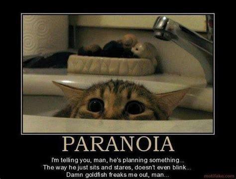Paranoid Meme - cat paranoid