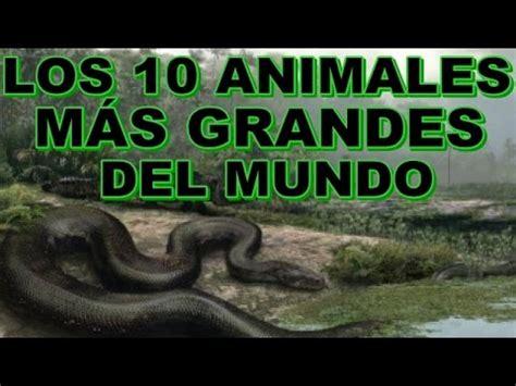 los grandes genios de 8490434859 top los 10 animales m 225 s grandes del mundo youtube