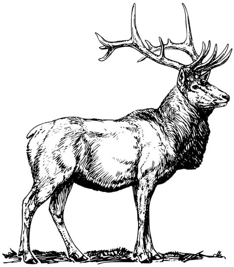deer fighting coloring pages buck deer fighting coloring pages