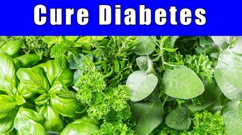 best cure for diabetes type 2 diabetes cure the best 10 herbs for diabetes best diabetes solutions