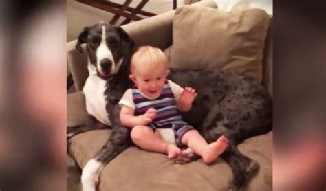 couch potato dog baby and giant pup best friend snuggle on the couch