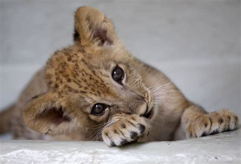 most adorable animals the most adorable baby animals of the year 45 pics