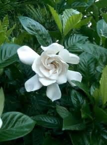 Most Common Garden Flowers Top 10 Most Popular Flowers Flowers Gardening