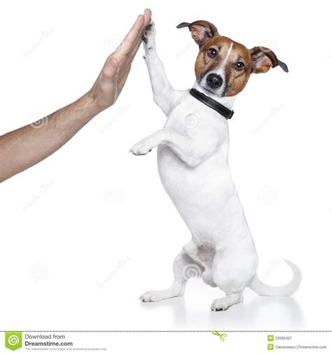 puppy high five high five stock image image 23266451
