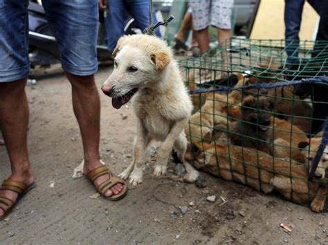 Dogs Were Saved Thanks To Twitter At The Yulin Festival Business Insider