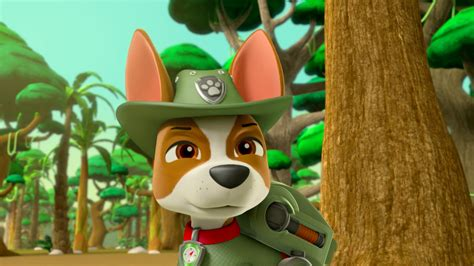 what of is tracker from paw patrol image paw patrol 315 55 tracker png paw patrol wiki fandom powered by wikia