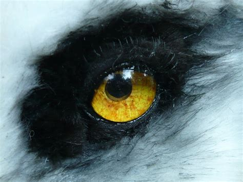 wolf eye color pale wolf eye by lilleahwest on deviantart