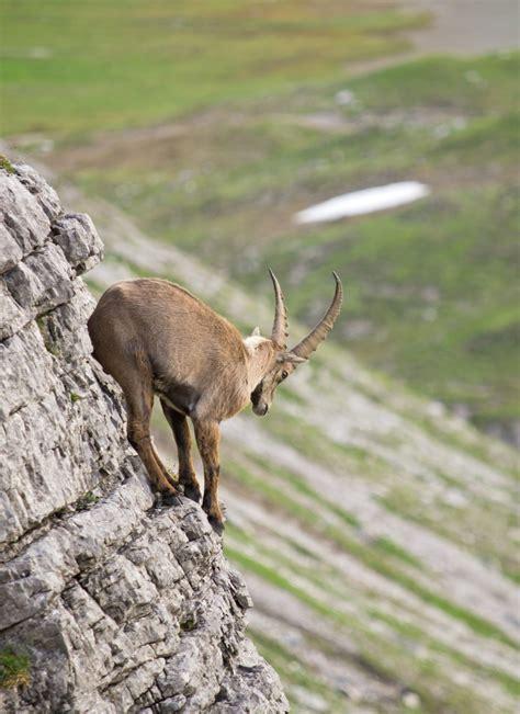 urlaub auf der alm tirol urlaub auf der alm tirol berghotel gerlosstein