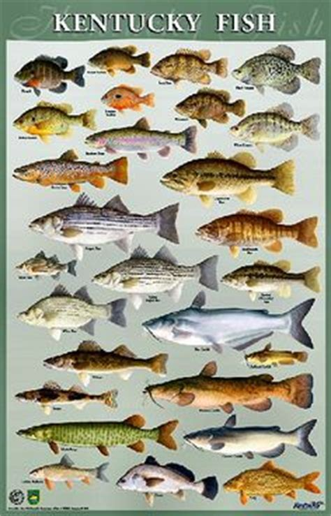 pa fish and boat species eastern gamefish identification chart affischer p 229